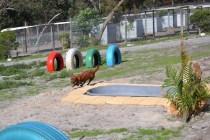 Banksia Park Puppies Poko - 8 of 19