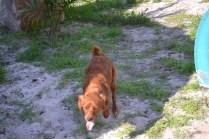 Banksia Park Puppies Poko - 9 of 19