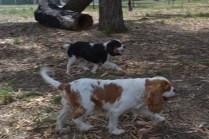 Banksia Park Puppies Petunia and Tia