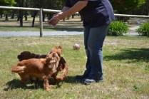 shazzoom-banksia-park-puppies-14-of-22