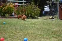 shazzoom-banksia-park-puppies-19-of-22