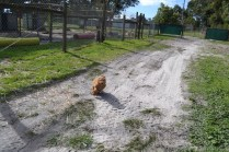 Banksia Park Puppies Ashton