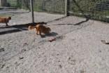 Banksia Park Puppies Sai