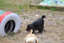 banksia-park-puppies-jacinta-wooster-ella-swoosh-18-of-51