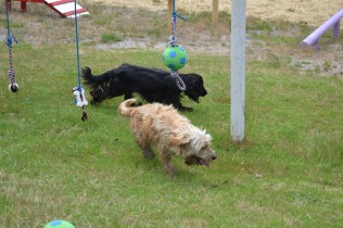 banksia-park-puppies-jacinta-wooster-ella-swoosh-42-of-51