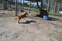 Banksia Park Puppies Swan - 25 of 28
