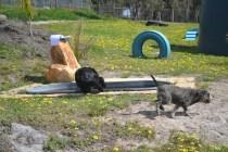 banksia-park-puppies-swish-15-of-34