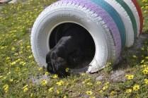 banksia-park-puppies-swish-19-of-34