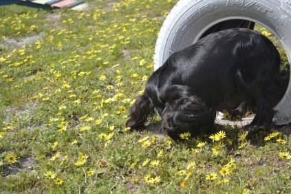 banksia-park-puppies-swish-20-of-34