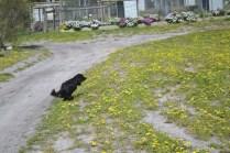 banksia-park-puppies-swish-3-of-34