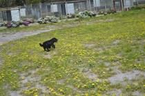 banksia-park-puppies-swish-4-of-34