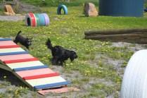 banksia-park-puppies-swish-6-of-34