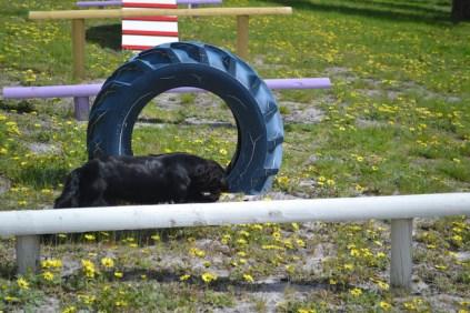 banksia-park-puppies-swish-9-of-34