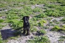 Banksia Park Puppies Swoosh - 10 of 37