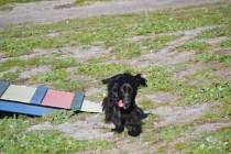 Banksia Park Puppies Swoosh - 21 of 37