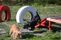 Banksia Park Puppies Swoosh - 23 of 37