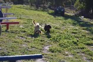 Banksia Park Puppies Swoosh - 3 of 37
