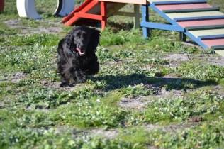 Banksia Park Puppies Swoosh - 37 of 37