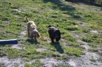 Banksia Park Puppies Swoosh - 7 of 37