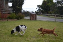 Banksia Park Puppies Lotto Sherry - 2 of 22