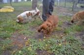 banksia-park-puppies-pavati-6-of-35
