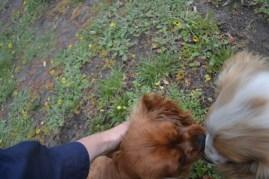 banksia-park-puppies-pavati-8-of-35