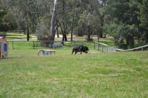 banksia-park-puppies-pruefull-11-of-36