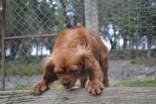 banksia-park-puppies-roz-6-of-8