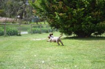 banksia-park-puppies-fire-20-of-29