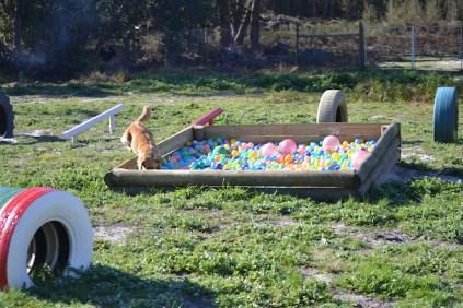 Banksia Park Puppies Oops - 10 of 54