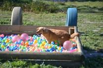 Banksia Park Puppies Oops - 15 of 54