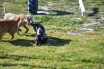 Banksia Park Puppies Oops - 20 of 54
