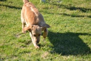 Banksia Park Puppies Oops - 23 of 54