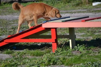 Banksia Park Puppies Oops - 32 of 54