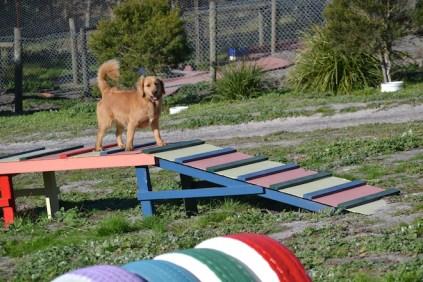 Banksia Park Puppies Oops - 35 of 54