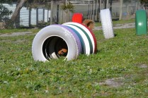Banksia Park Puppies Oops - 39 of 54