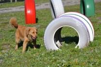 Banksia Park Puppies Oops - 40 of 54