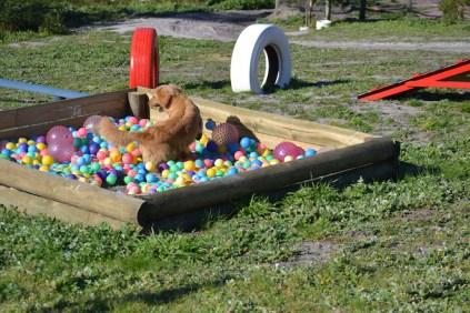 Banksia Park Puppies Oops - 46 of 54