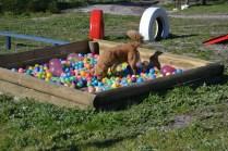 Banksia Park Puppies Oops - 48 of 54