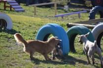 Banksia Park Puppies Oops - 6 of 54