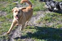 Banksia Park Puppies Oops - 9 of 54