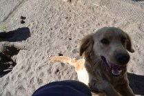 Banksia Park Puppies Ooshka - 12 of 31