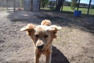 Banksia Park Puppies Ooshka - 31 of 31