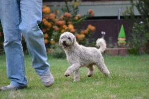 fb Banksia Park Puppies Jack 11