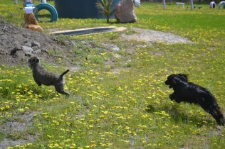 banksia-park-puppies-loopy-1-of-15