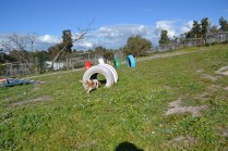 Banksia Park Puppies Ravi - 32 of 39