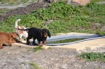 Banksia Park Puppies Ravi - 8 of 39