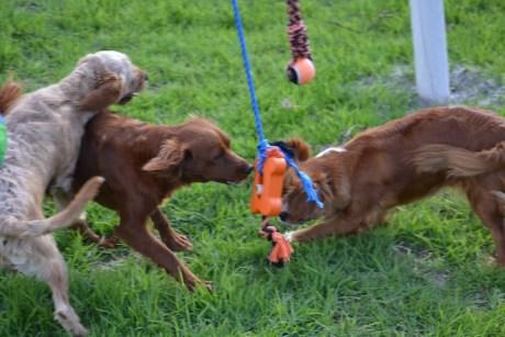 Banksia Park Puppies Rivi - 2 of 8
