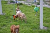 Banksia Park Puppies Rivi - 4 of 8