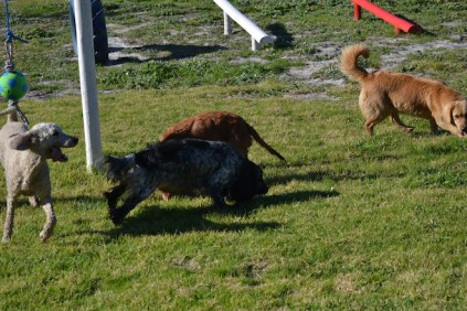 Banksia Park Puppies Shorty - 23 of 36